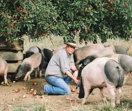 Rudolf Bühler mit seinen Schweinen auf der Weide unter dem Apfelbaum