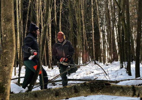 Waldarbeit Bauern mit Motorsäge im Wald