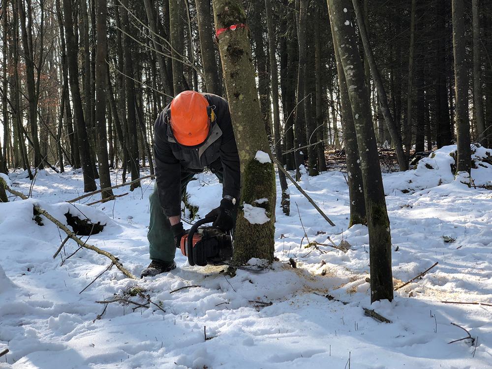 Bauer fällt Laubbaum mit Motorsäge im Winter