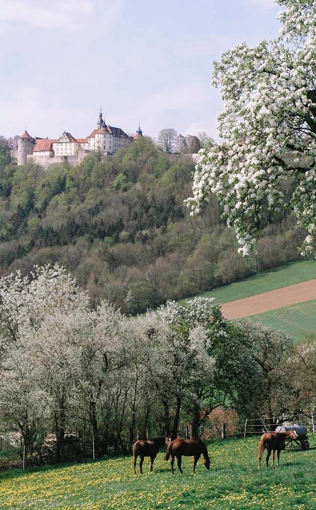Schloß Kirchberg fotografiert vom gegenüberliegenden Berg. Pferde grasen auf der Weide dazwischen