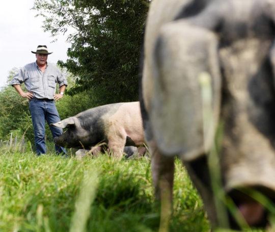Serie: Schwäbisch-hällisches Schwein g.g.A.