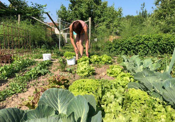 Alles Wächst Im Bauerngarten Schwäbisch Hällisches