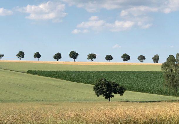 Getreidefelder bei Wolpertshausen.