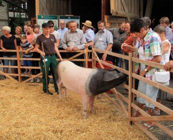 Sintha Preuß stellt eine Zuchtsau auf der Schau beim Hoffest vor