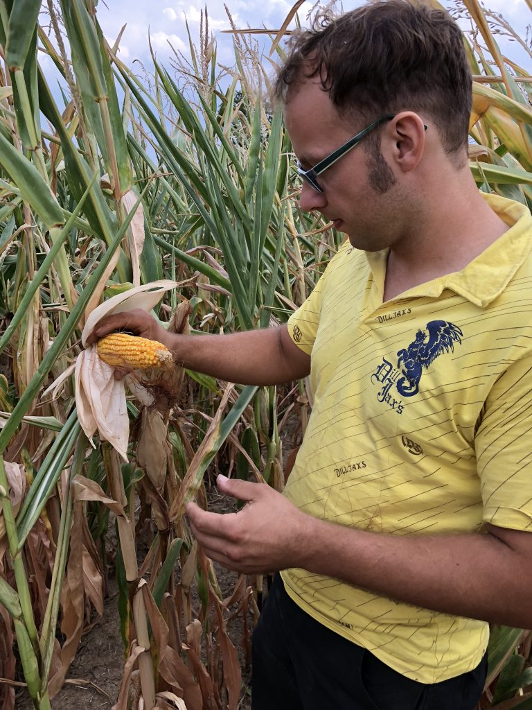 Landwirt Markus Ehrmann im Maisfeld.