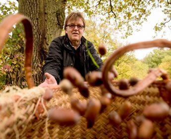 Frieder Wieland sammelt Eicheln für die Schweine.