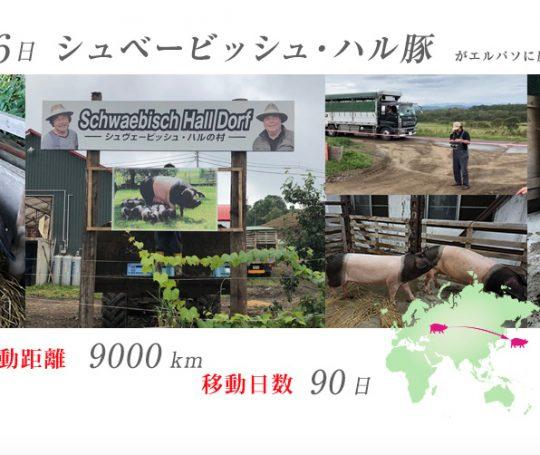 """Mit einem neuen Schild """"SchwaebischHallDorf"""" und Fotos aus Hohenlohe wirbt Hideaki Hirabayashi auf der Webseite für seine Farm in Japan."""