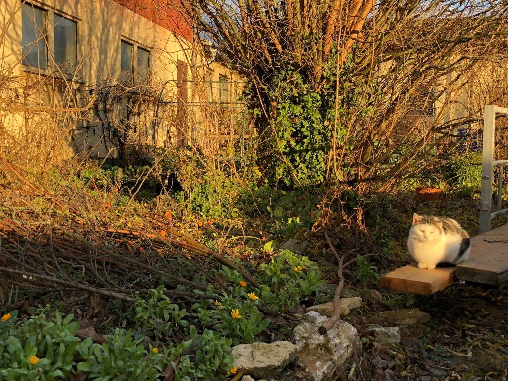 Eine Hofkatze sonnt sich in den wärmenden Strahlen.