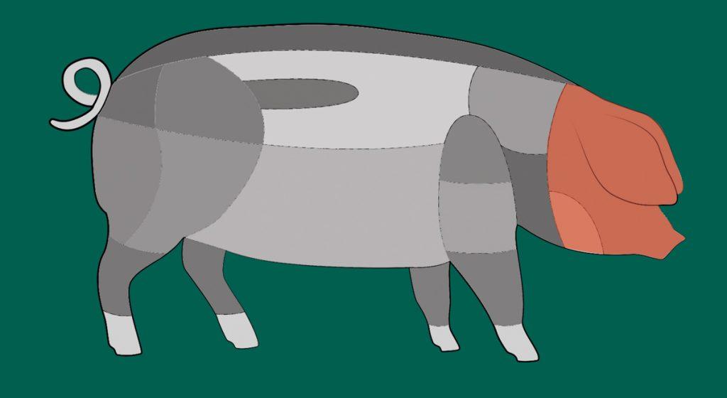 Schema eines Schwäbisch-Hällischen Schweins.