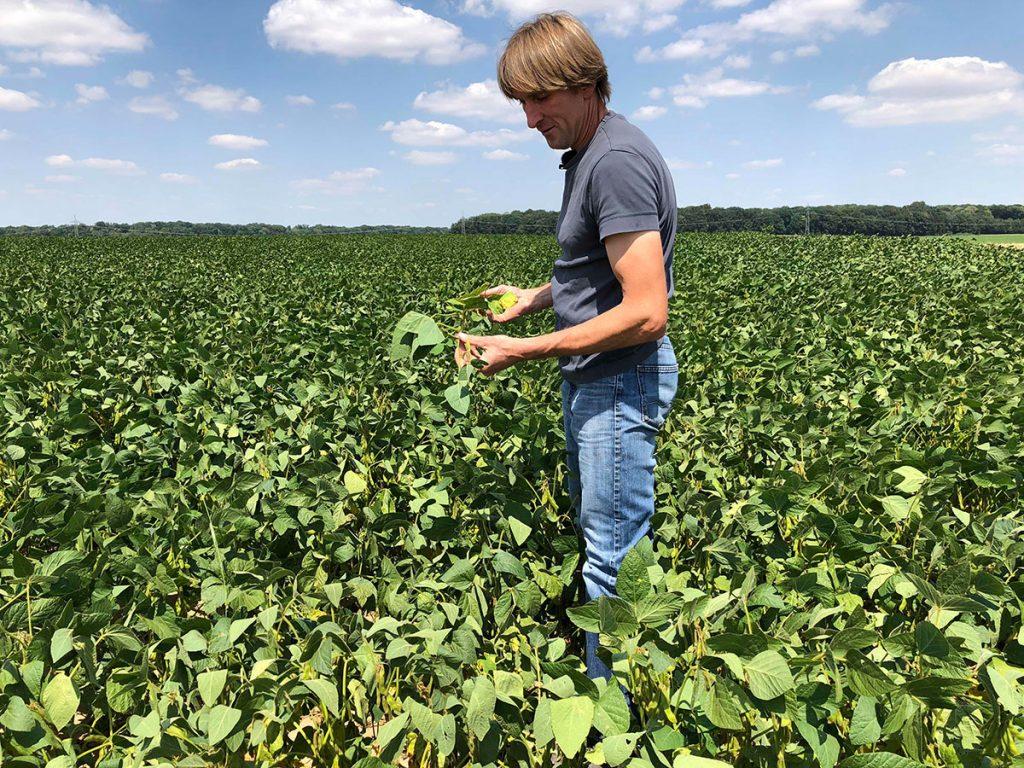 Der Landwirt Albrecht zeigt auf einem Feld seine Soja-Pflanzen