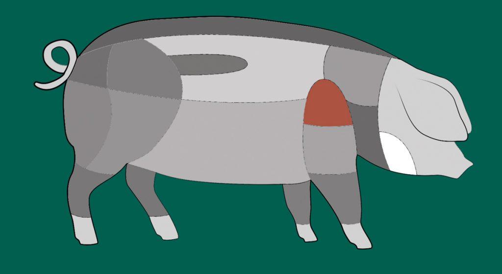 Hier sitzt das Schäufele eines Schwäbisch-Hällischen Schweins.