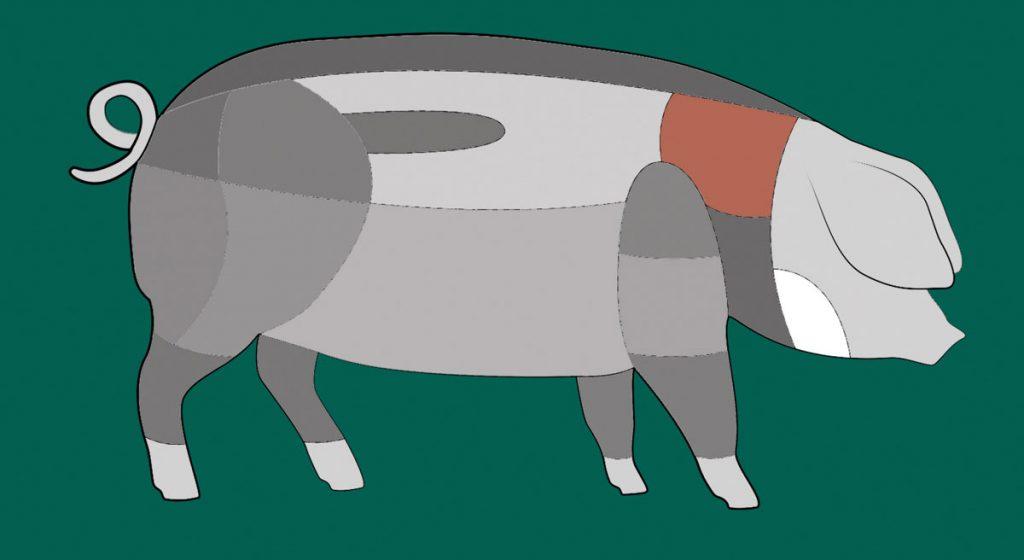 Hier sitzt der Hals eines Schwäbisch-Hällischen Schweins.