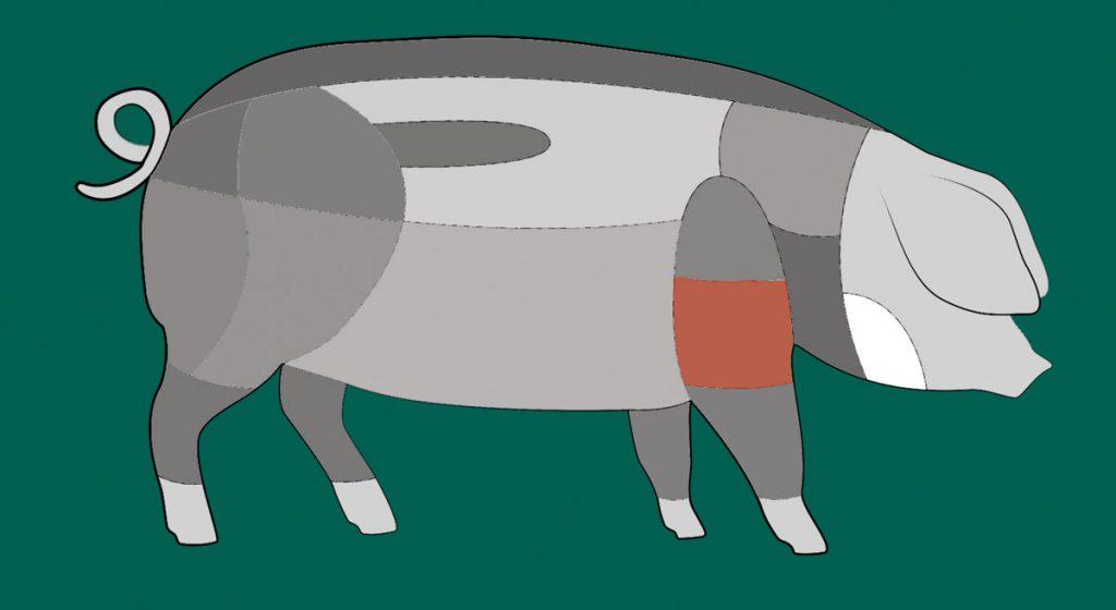 Schema: Hier sitzt der Bug eines Schwäbisch-Hällischen Schweins