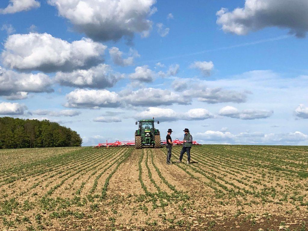 Adrian Schäfer und Rainer Franz striegeln ein Feld mit Ackerbohnen
