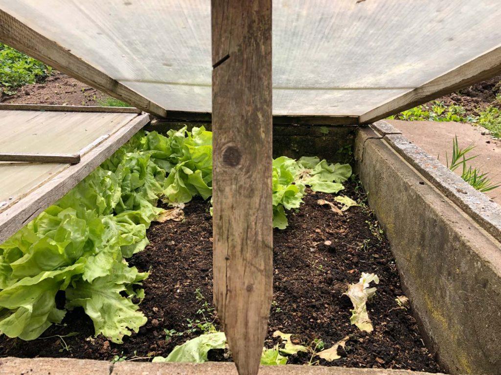 Salat gibt's natürlich aus dem eigenen Garten