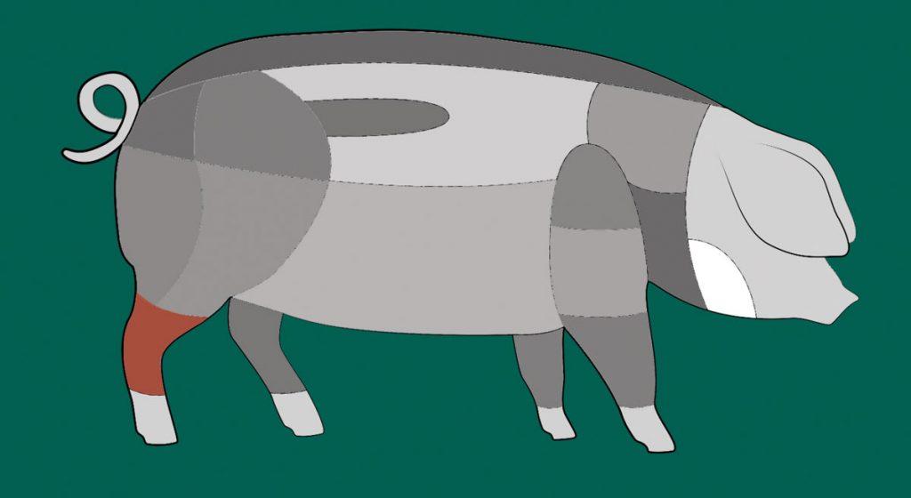 Schema: Hier sitzt die Hinterhaxe des Schwäbisch-Hällischen Schweins.