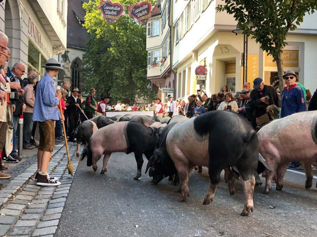 Tausende Zuschauer säumen die Straßen in Bad Cannstatt.