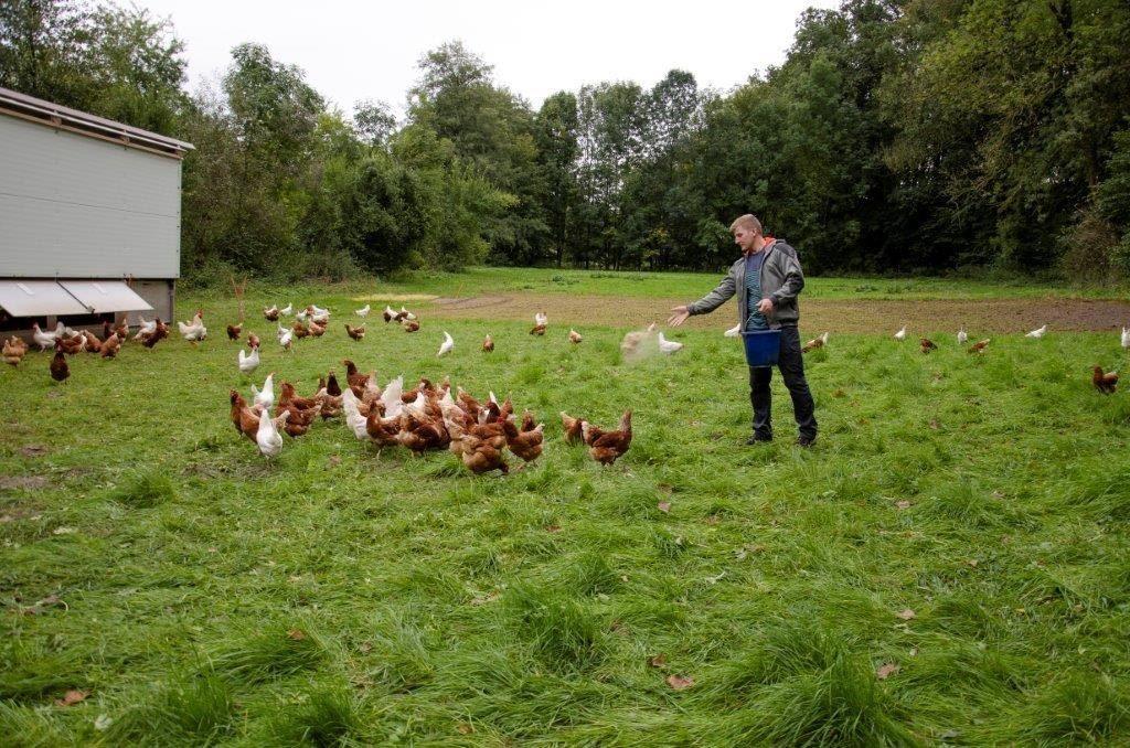 Der Jungbauer hat in zwei Hühnermobile investiert. Die Eier werden im Hofladen verkauft.