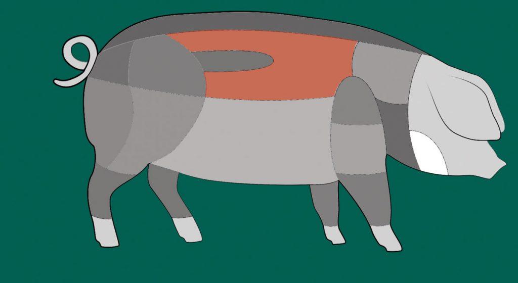 Hier sitzt das Kotelett des Schwäbisch-Hällischen Schweins.