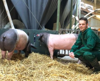 Jung-Landwirt Frank Rahn mit zwei frisch gebackenen Schwäbisch-Hällischen Zuchtsauen.