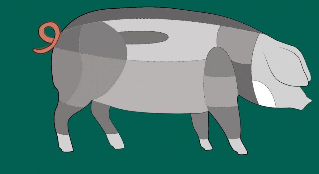 Hier sitzt das Schwänzle des Schwäbisch-Hällischen Schweins.