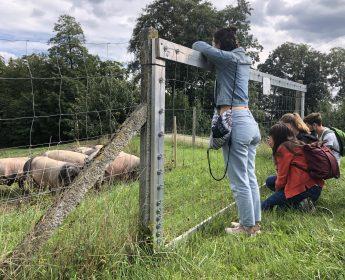 Tierwohl in der Praxis: Teilnehmer der Sommerschule besuchen die Schweineweide am Hirschhof