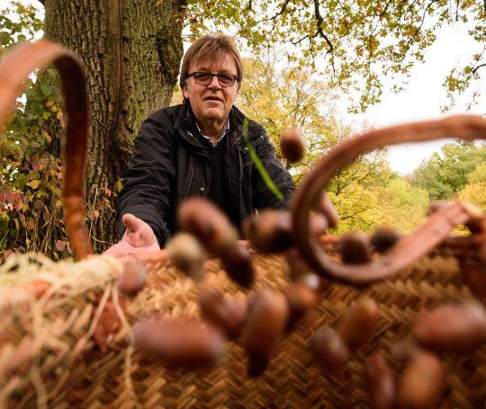 Frieder Wieland sammelt Eicheln für die Schwäbisch-Hällischen Weideschweine.