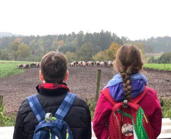Zwei Naturentdecker stehen am Zaun der großen Weide, auf der die Schwäbisch-Hällischen Schweine leben.