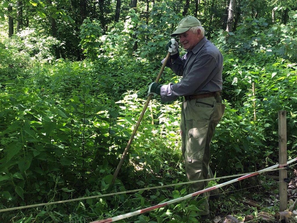 Senior Friedrich Walter betreut die Schwäbisch-Hällischen Waldweideschweine.