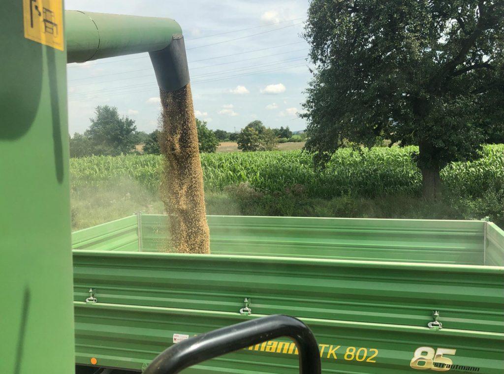 Über ein Rohr rieselt das Getreide in den Anhänger.